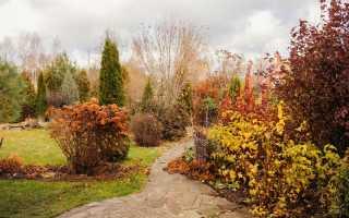 Какие работы проводят в саду и огороде в ноябре?