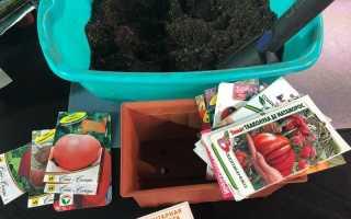 Когда сажать помидоры на рассаду в 2019 году: общие сроки и лунный календарь