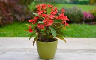 Растения для контейнеров, горшков и кашпо