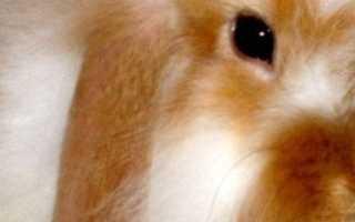 Как дрессировать кролика и приручить кролика к лотку?