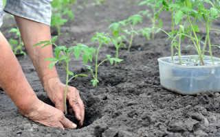 Когда высаживать томаты в открытый грунт, теплицы и под укрытия