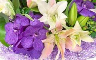 Разновидности расцветок лилий: белая, золотая, черная и др.