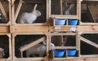 Клетки для кроликов своими руками: чертежи с размерами, пошаговые инструкции по изготовлению разновидностей (Михайлова, Золотухина, двухъярусные и прочие) с фото и видео