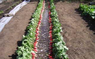 Что посадить после уборки редиса