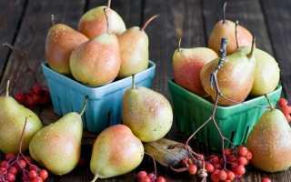 Лучшие осенние сорта груши, в том числе для выращивания в различных регионах с описанием, характеристикой и отзывами