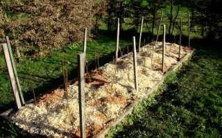 Посадка малины осенью в открытый грунт: сроки, правила, инструкции с фото и видео
