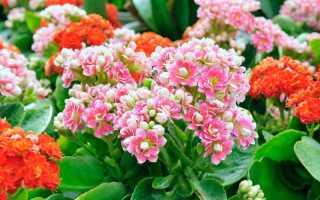 Какие растения подходят для детской комнаты