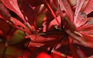 Выращиваем барбарис и изучаем особенности его посадки и ухода