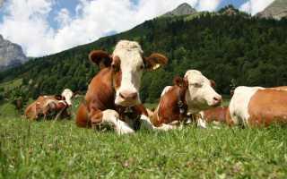 Какой навоз лучше: конский или коровий, делаем правильный выбор