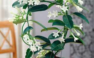 Комнатные растения с приятным и стойким ароматом