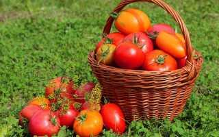 Посадка и выращивание помидоров по методу Митлайдера
