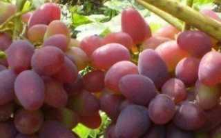 Подкормка винограда – когда и как вносить удобрения?