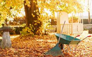 Что делать на даче в ноябре: план действий