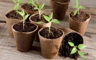 Лунный календарь садовода и огородника на февраль 2020