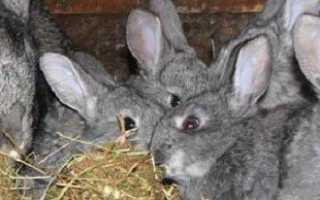 Основные правила содержания кроликов, поддержание здоровья, кормление