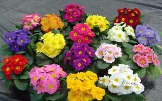 Какие цветы можно посеять зимой на рассаду