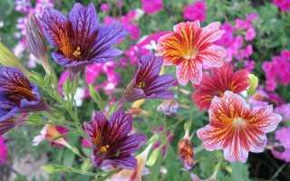 Цветы, которые высевают в последний месяц зимы