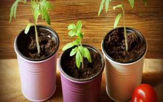 Благоприятные дни для посадки томатов, в том числе в марте, а также дни посева по лунному календарю