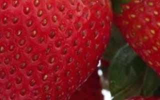 Технология выращивания клубники в открытом грунте +видео