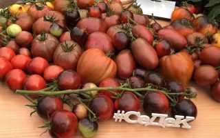 Шоколадные томаты от СеДеК