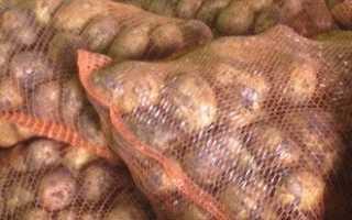 На какую урожайность картофеля с сотки мы можем рассчитывать (средняя урожайность)