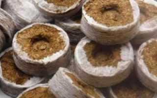 Торфяные таблетки для рассады: как пользоваться, особенности выращивания в них + видео