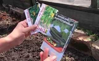 Посадка огурцов: сроки, способы, уход после посева