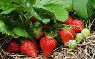 Чем удобрять клубнику осенью для лучшего урожая
