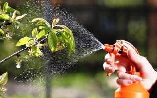 Чем опрыскивать вишню от тли и болезней, до и после цветения