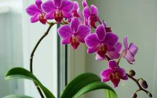 Как заставить орхидею зацвести? 6 полезных советов