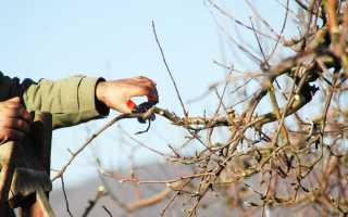 Обрезка яблони весной , когда и как правильно ее делать, а также схема формирования кроны