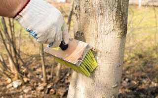 Чем лучше белить деревья осенью: известью, мелом или краской