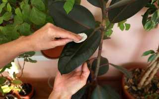 10 правил успешного перехода комнатных растений от зимы к весне