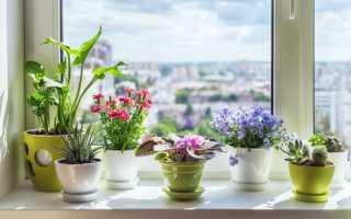 5 самых ярких комнатных растений, которые цветут всё лето