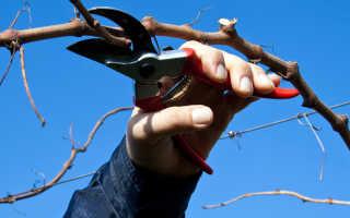 Обрезка винограда весной — сроки и пошаговая схема, советы для начинающих