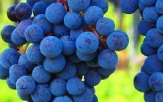 Решетка для винограда — удобное средство для подвязки виноградных лоз