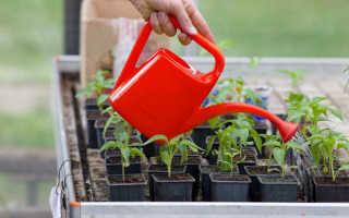 Средства для подкормки рассады, которые поспособствуют большому урожаю