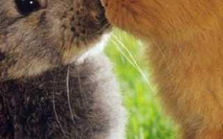 Случка кроликов – все способы достижения отличных результатов