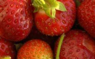 Выращивание клубники в домашних условиях или стоит ли шкурка выделки