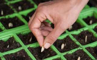 Правила выбора подходящих семян