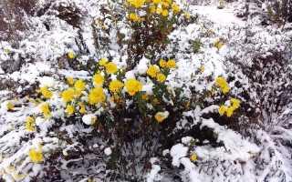 Растения, которые нужно обязательно укрывать на зиму: подборка с пояснениями