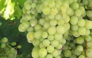 Выращивание винограда – пошаговая инструкция