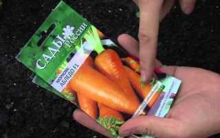 Посадка моркови: сроки и способы