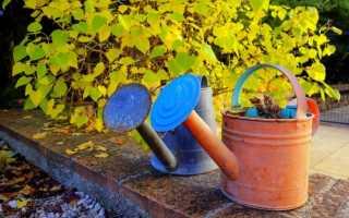Как провести подзимний полив сада: сроки и правила