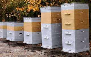 Каким должен быть улей для пчел