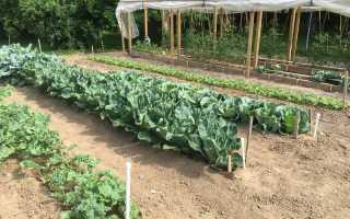 Посадка овощей по методу Митлайдера: основные правила, видео