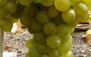 Полив винограда летом — основные правила и особенности