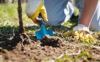 Удобрения для внесения осенью
