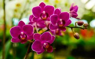«Аминозол для орхидей» – жидкое органическое удобрение с полным комплексом аминокислот