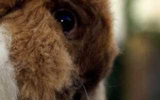 Лечение кроликов и возможные проблемы: понос, вздутие живота, глисты и др.